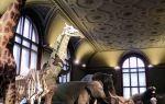 Национальный музей естественной истории, париж, франция