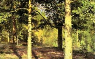 Картина шишкина «сосны, освещенные солнцем», 1886