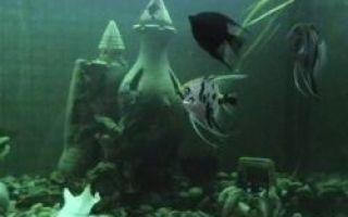 Красные рыбки, анри матисс — описание картины
