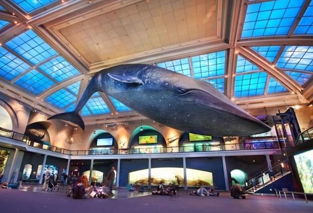 Американский музей естественной истории, Нью-Йорк