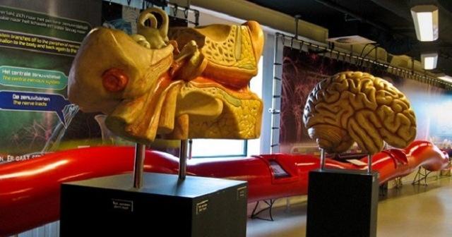 Музей человеческого тела