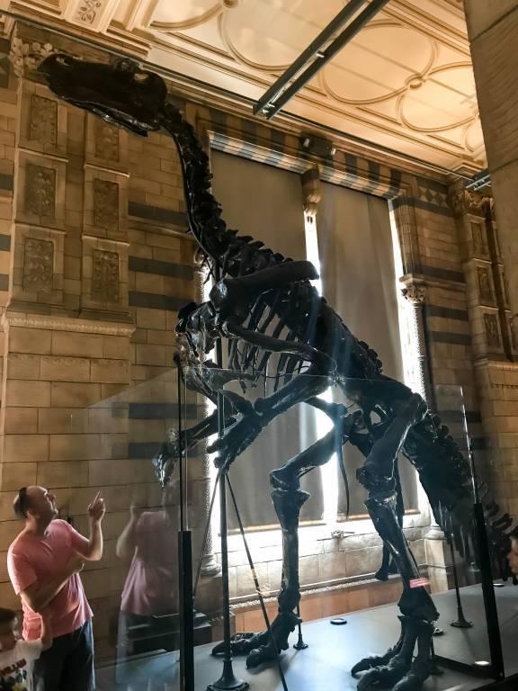 Музей естественной истории (естествознания) в Лондоне
