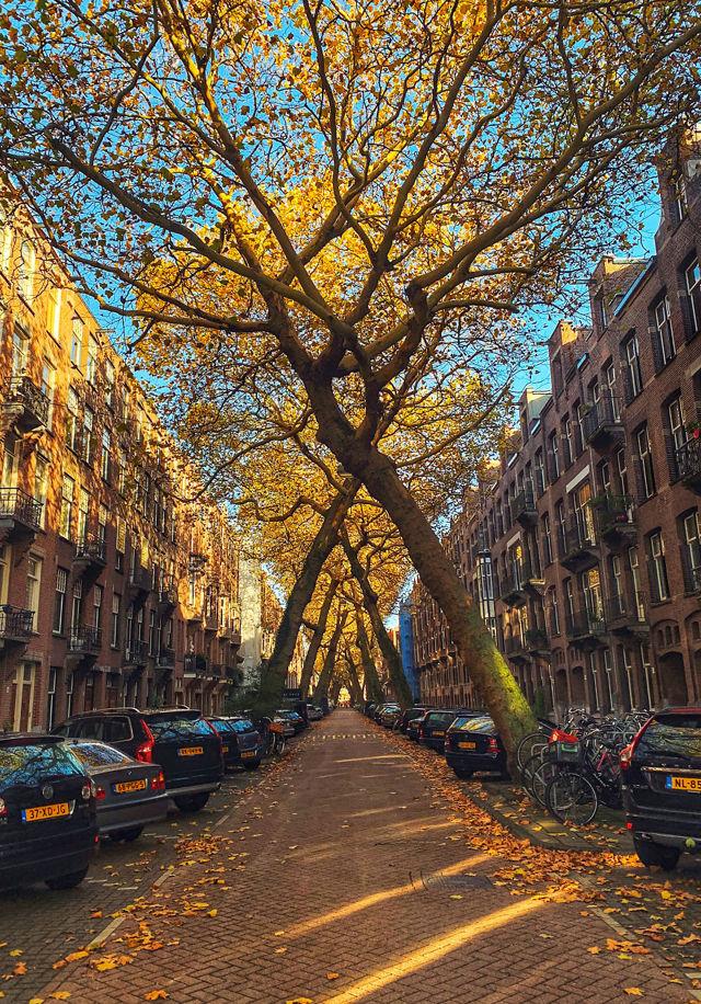 Амстердам в ноябре: туры, погода, фото