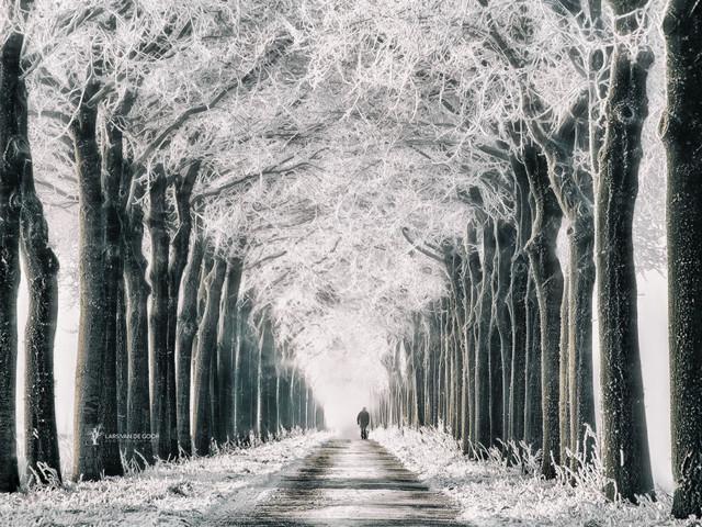 «Лес», Ларс Хертервиг — описание картины