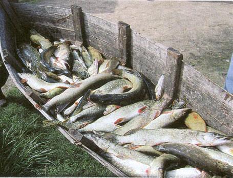 Рыбная ловля, Перов, 1878