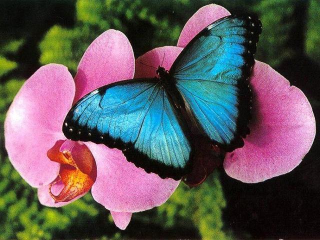 Музеи живых бабочек в Санкт-Петербурге, адрес и фото